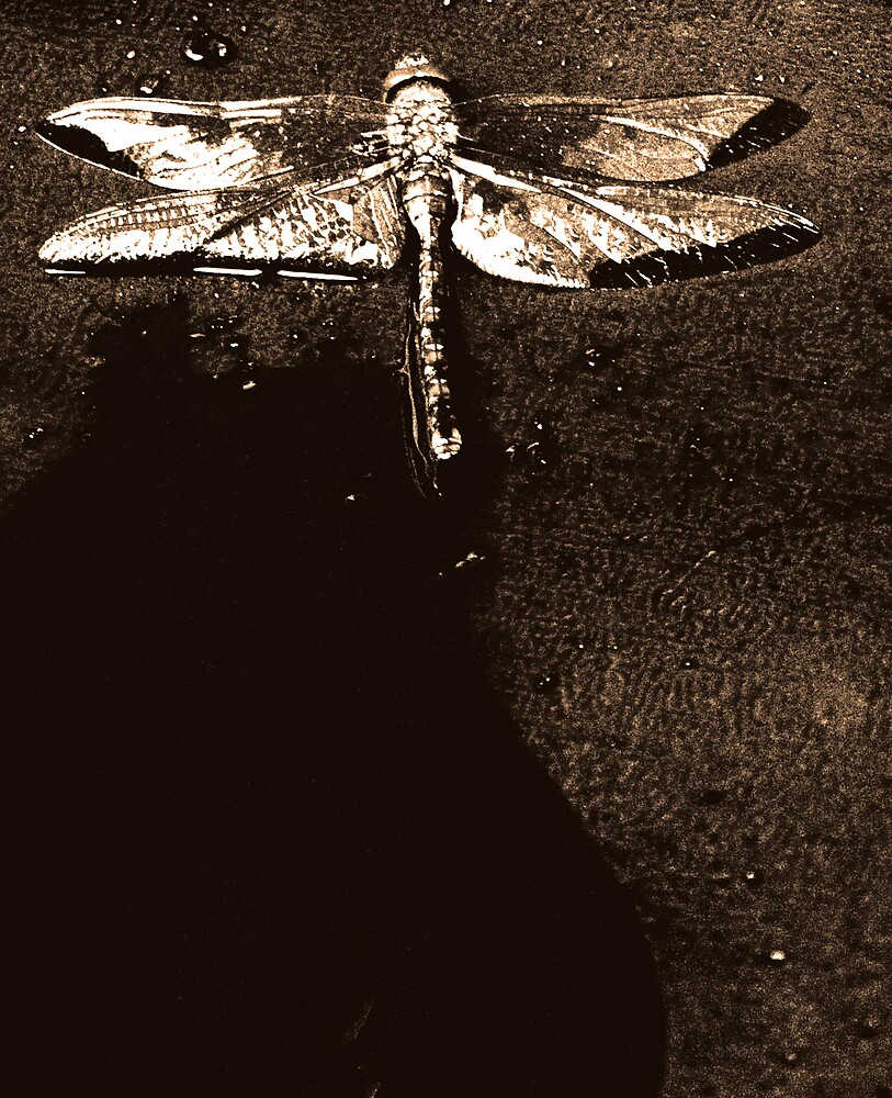 Sepia Dragonfly by Sarah McTernen