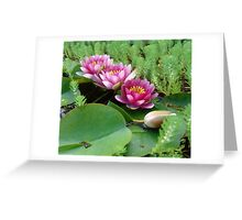 Waterlilies and Parrot Feather Greeting Card