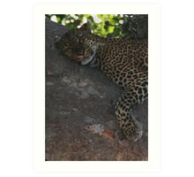 Bella The Leopard  Art Print