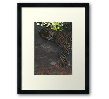 Bella The Leopard  Framed Print