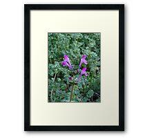 Tea plant Framed Print