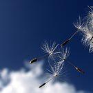 Fly by deannedaffy