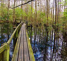 Cypress Boardwalk by Michael Wolf