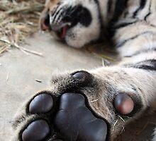 Paw by tracyleephoto