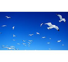 Fluttering Skies Photographic Print