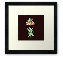 crown imperial flower Framed Print
