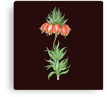 crown imperial flower Canvas Print