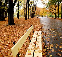 Falling leaves on an empty bench by alternakive