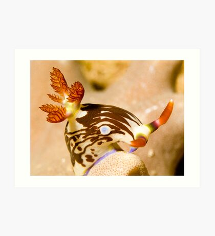 Nudi Taking a Bow Art Print