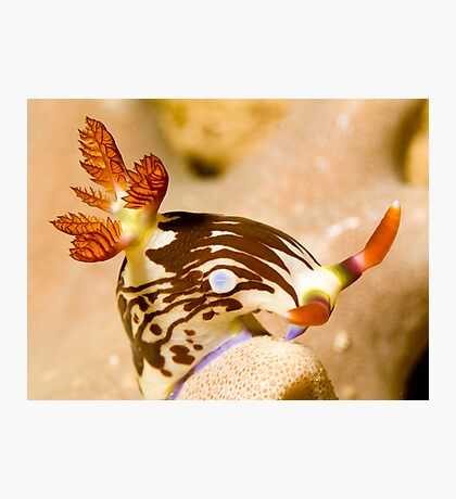 Nudi Taking a Bow Photographic Print