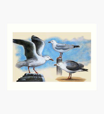 Silver Gulls 2 Art Print