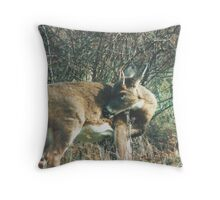 080706-78  WHEN YA GOT AN ITCH... Throw Pillow