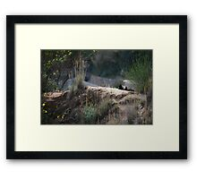 two fluffy black kitten Framed Print