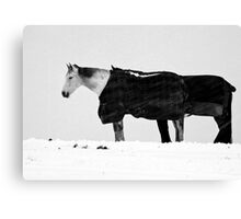 Two Horses In Blizzard Canvas Print