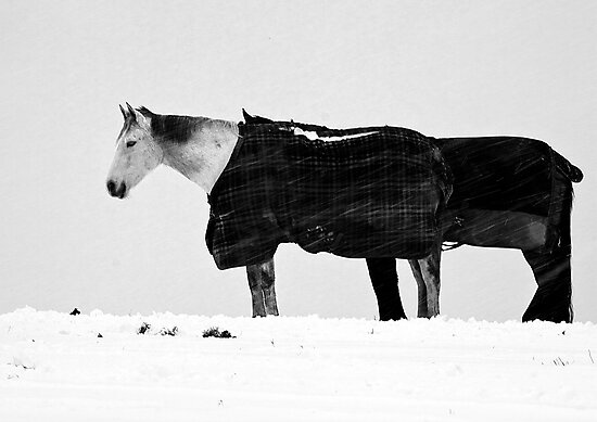 Two Horses In Blizzard by drbeaven