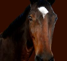 Mr Horse by Mariann Kovats