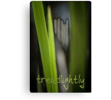 Tread Lightly © Vicki Ferrari Canvas Print