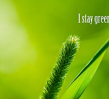 Green Grass And Sun - I stay green by luckypixel