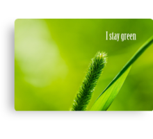 Green Grass And Sun - I stay green Canvas Print