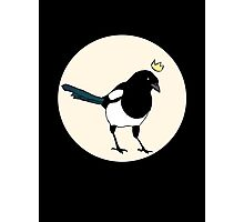 King Magpie Photographic Print