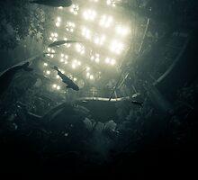 Submerge by Alex Shahmiri