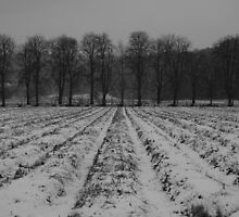 Trees and snowy furrows by kingfisher