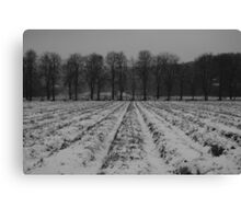 Trees and snowy furrows Canvas Print