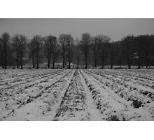 Trees and snowy furrows Photographic Print
