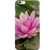 Water Lily (1) iPhone Case/Skin