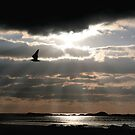 """Lone Gull"" by Raymond Kerr"