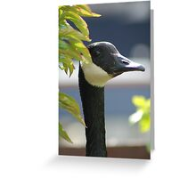 I've Got my Eye on You! Greeting Card