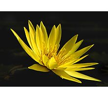 Yellow Waterlily, up close Photographic Print