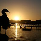 Duck Silhouette by kimwild