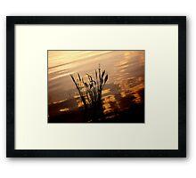 Floridan Loner Framed Print