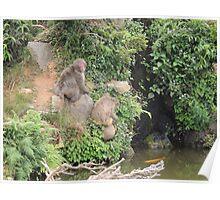 Monkeys at Arashiyama Poster