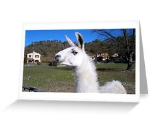 Graceful llama  Greeting Card