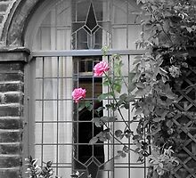 window roses by lukasdf