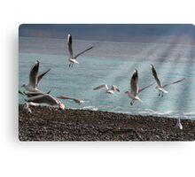 Sea birds Canvas Print