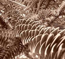 jardin des plantes Lille by William Lyszliewicz