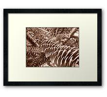 jardin des plantes Lille Framed Print