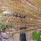 cycad by christopher  bailey