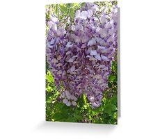 Chinese Wisteria Greeting Card