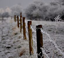 Fence post by Karen  Betts