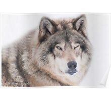..the wink of a wolf..... Poster