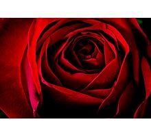 Rose Closeup Photographic Print