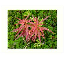 Tundra Plant Art Print