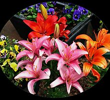 Colourful Lilies and Pansies - Oval Vignette by Kathryn Jones