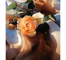 i love orange roses Photographic Print