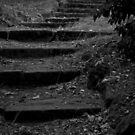 Stairway to nowhere by MIchelle Thompson