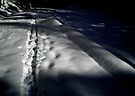 Trails  by Mojca Savicki